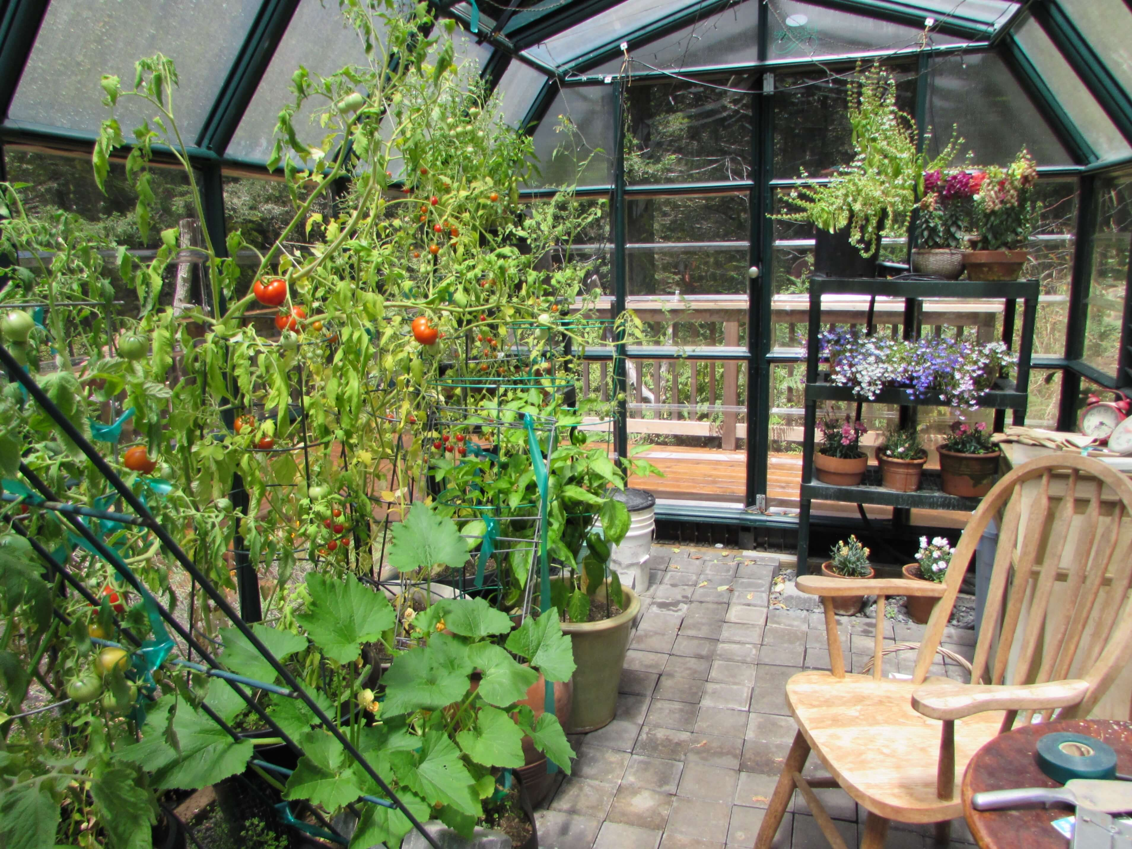 Vegetables growing in a large greenhouse