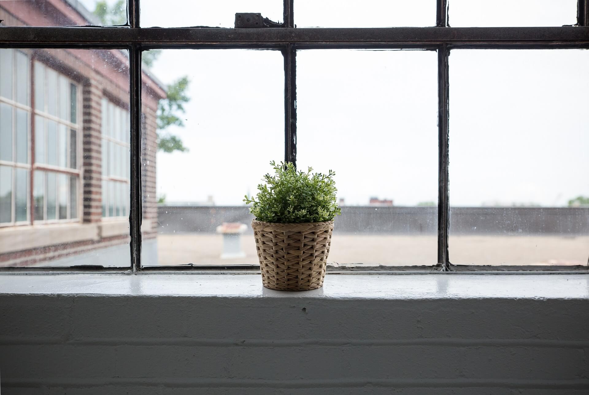 A photograph of a plant pot standing on a windowsill, lit by natural light. Out of the window the rest of the building is visible, as is a large playing field and fence.