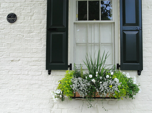 Plants in a window box