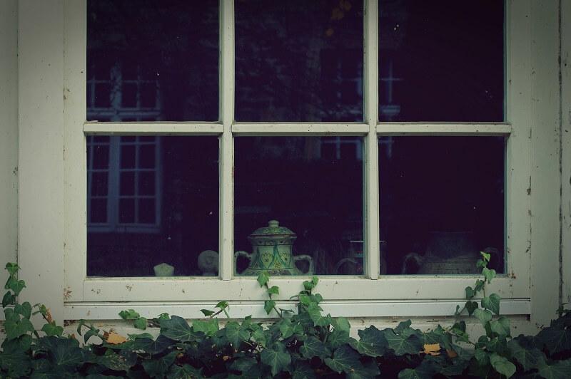 Ivy growing up window