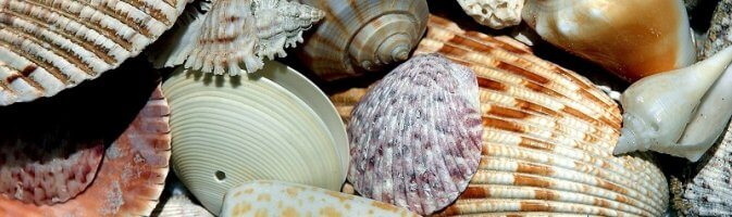 Window dressing with shells