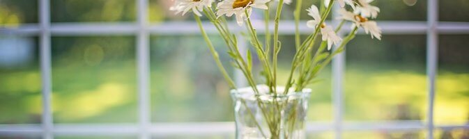 Daisies in front of window