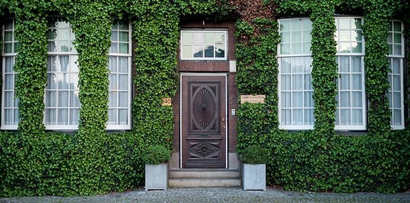 Front door ivy